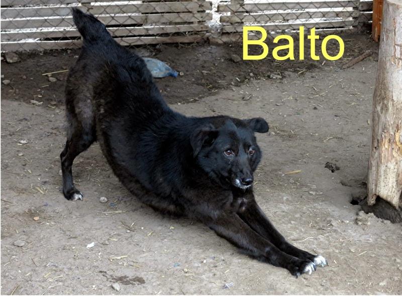 Balta notre senior Balto10