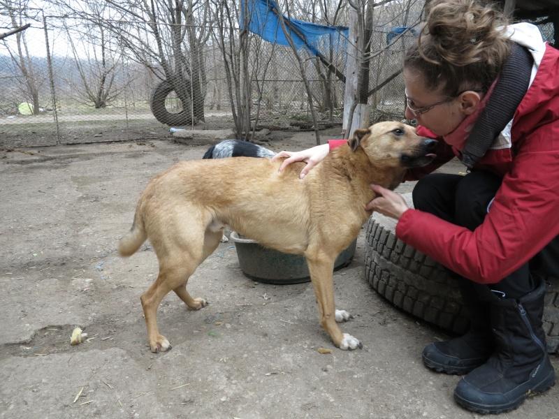 Tzupy, chien de notre quartier, mâle très sociable, né en 2009. Img_2812