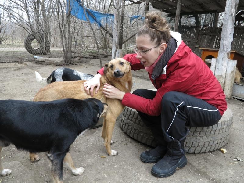 Tzupy, chien de notre quartier, mâle très sociable, né en 2009. Img_2813
