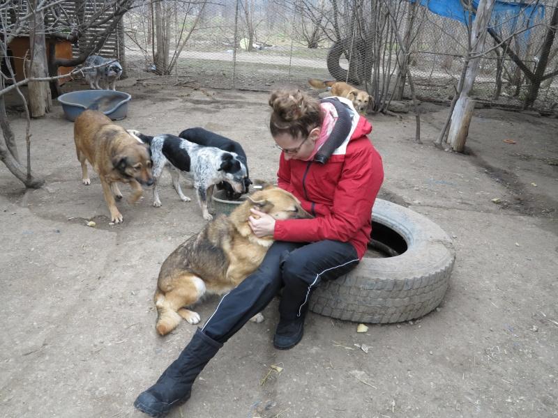 Nana, mère des chiots des ruines, 6 ans - Adoptée ! Img_2818