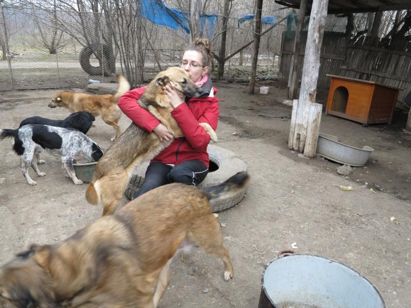 Nana, mère des chiots des ruines, 6 ans - Adoptée ! Img_2819