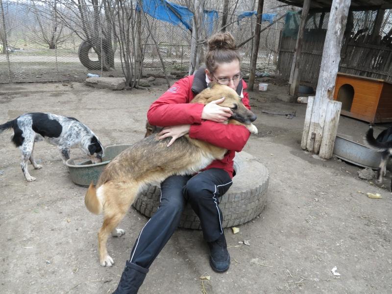 Nana, mère des chiots des ruines, 6 ans - Adoptée ! Img_2821