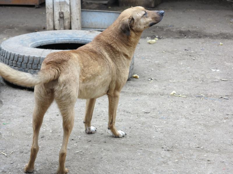 Tzupy, chien de notre quartier, mâle très sociable, né en 2009. Img_2911