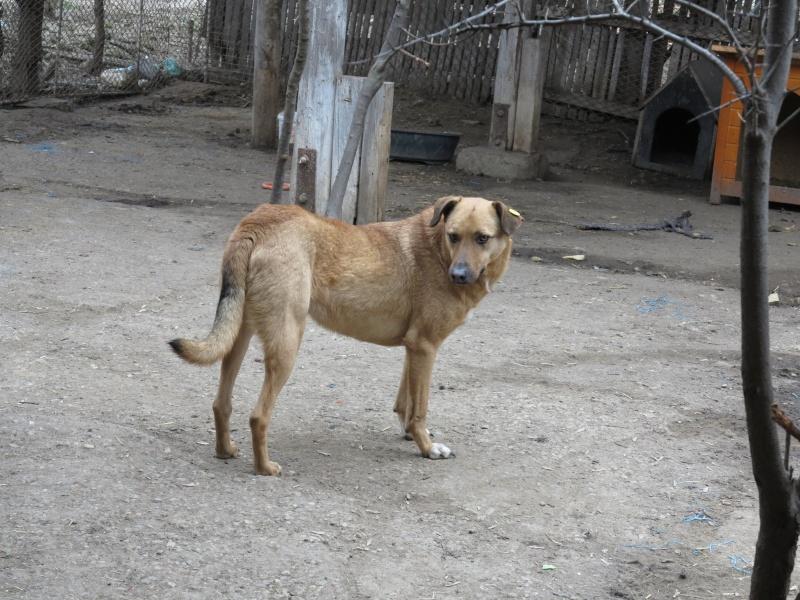 Tzupy, chien de notre quartier, mâle très sociable, né en 2009. Img_3011
