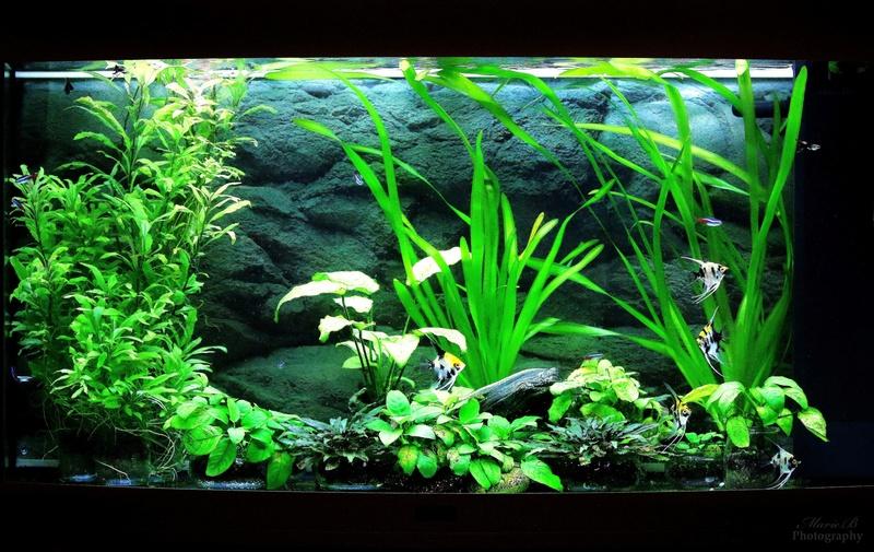 Mes aquariums Img_4110