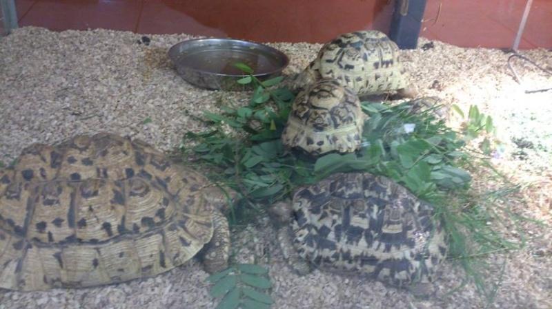 Petite visite chez Animal Express 13958710