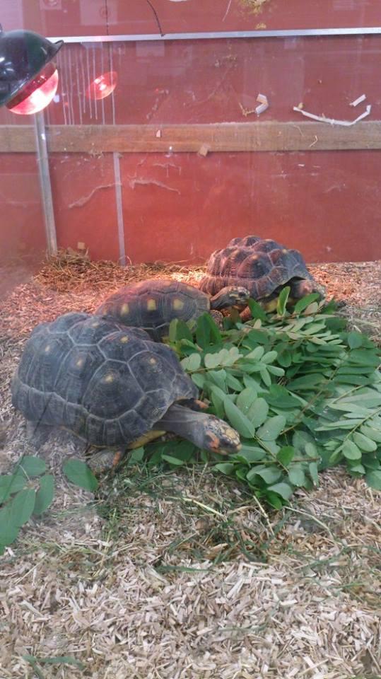 Petite visite chez Animal Express 99437410