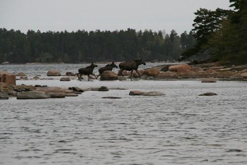 Voyage Suède Ob_7f410