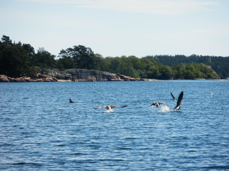 Voyage Suède P5140010