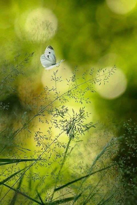 Le petit monde des  jardins de notre manoir... - Page 10 18157310