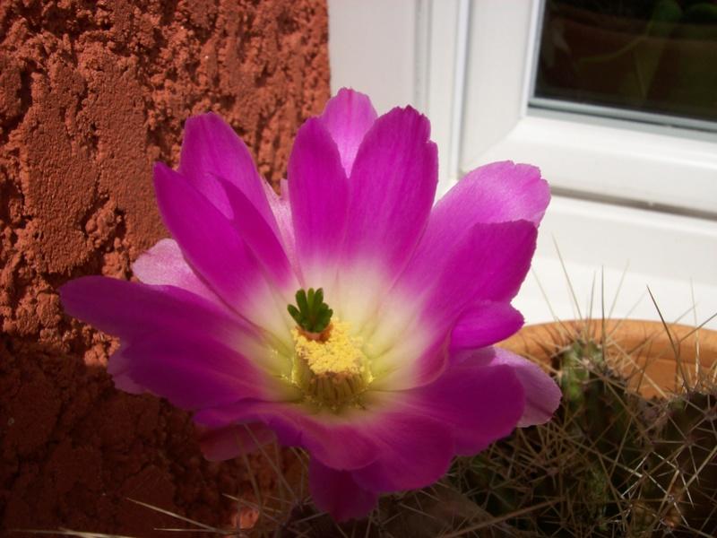 ces quelques fleurs de nos jardins - Page 3 2007-011