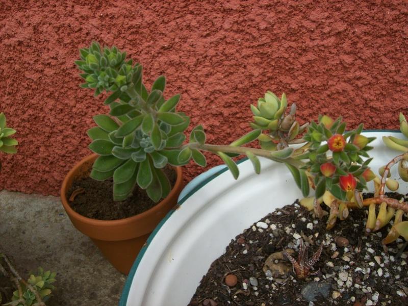 ces quelques fleurs de nos jardins - Page 3 2007-012