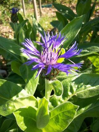Blue..........bleu !!! - Page 14 Photo181