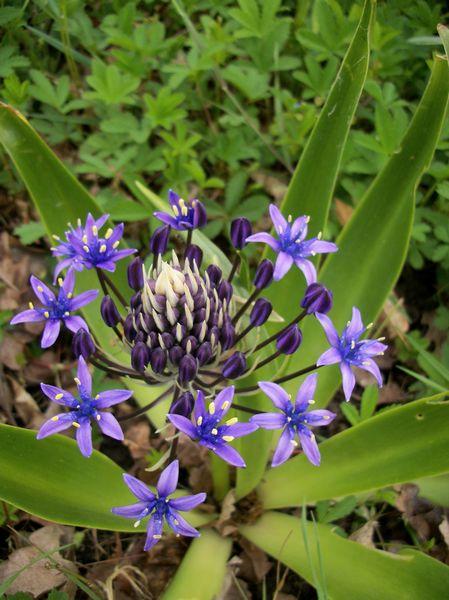 Blue..........bleu !!! - Page 14 Photo396