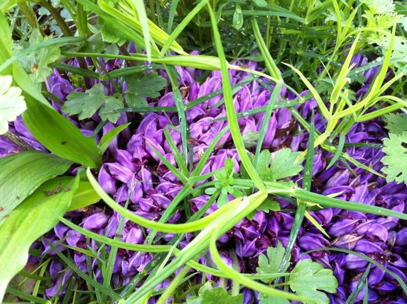 plante sauvage 02910