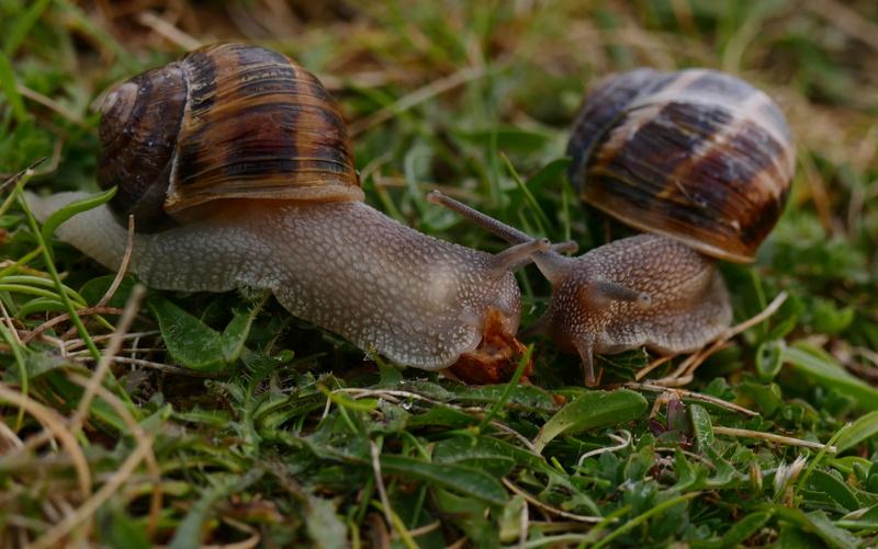 Un amour d'escargot P1500111