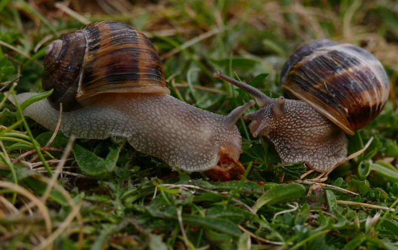 Un amour d'escargot P1500112