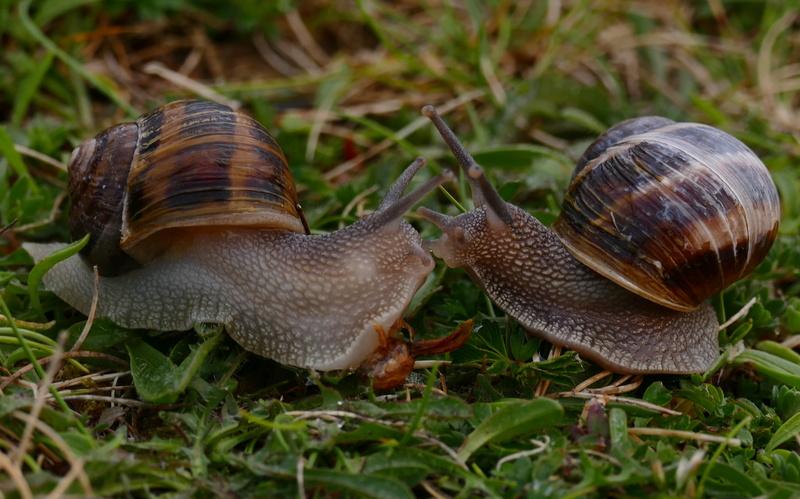 Un amour d'escargot P1500113
