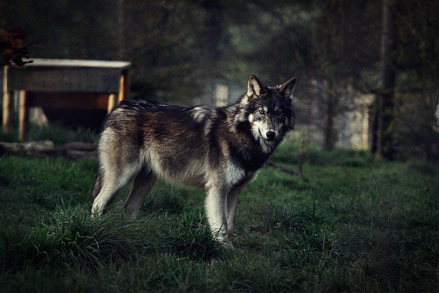 Suzanne aux Griffes de Lionne ϟ UC Wolf_b10