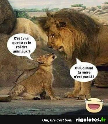 HUMOUR - blagues - Page 17 18bf5910