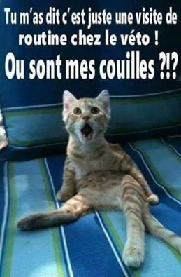 HUMOUR - blagues - Page 17 807fc710