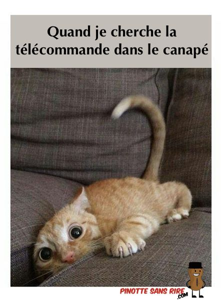 HUMOUR - blagues - Page 17 959c0110