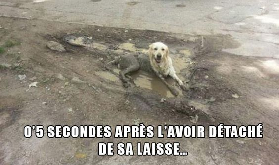 HUMOUR - blagues - Page 20 C42bb810