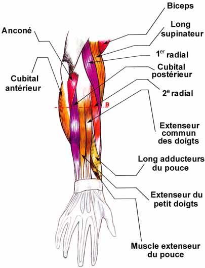 Douleur avant-bras du décocheur Avant110
