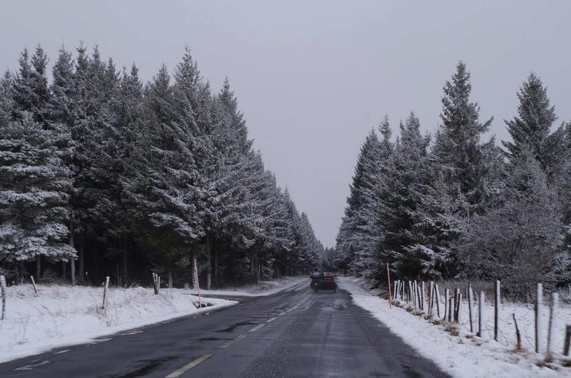 L'hivernale de la Burle - 2017 17157610