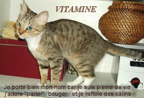 cette semaine  VITAMINE , ILLICO, 2 CHATONS  Vitami11
