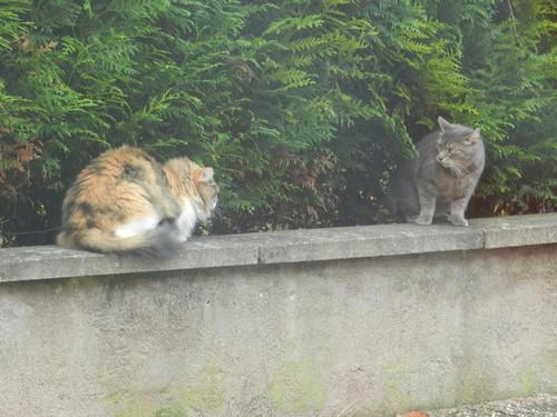 """se regarder en """"chats"""" de faïence.... Dscn4011"""