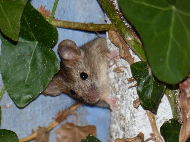 Une souris dans mon jardin Copie_13