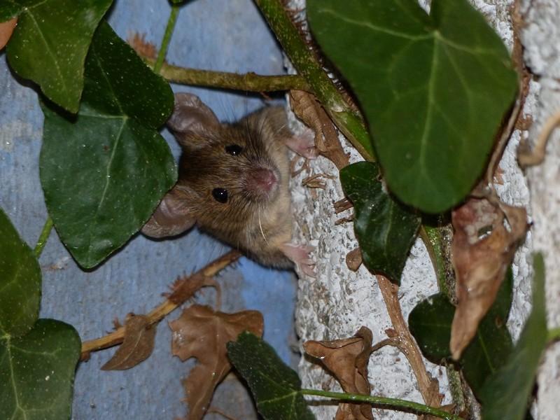 Une souris dans mon jardin Copie_14