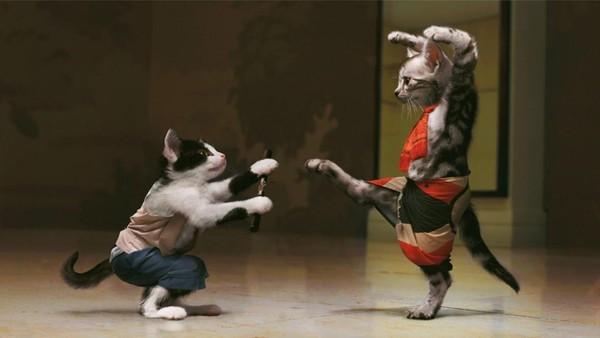 Nos amis, les animaux(quand ils font semblant d'être bête) - Page 6 Chat10