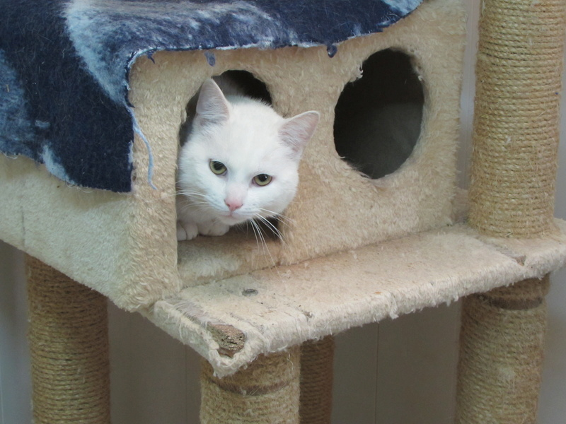 OLAF LE CHAT 00125