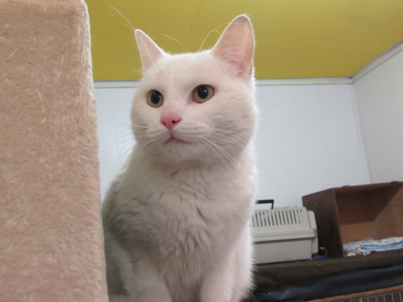 OLAF LE CHAT 00824