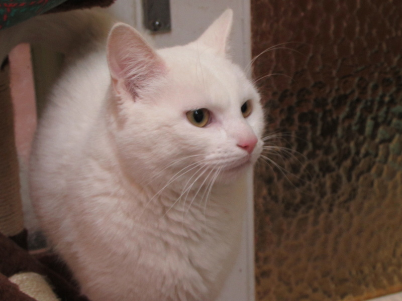 OLAF LE CHAT 01027