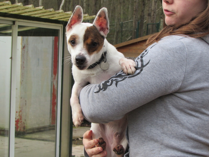 LOULOU, X Jack Russel 01618