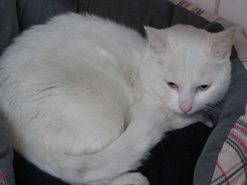 OLAF LE CHAT 01927