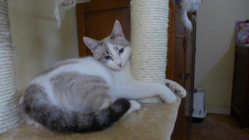 Photos des chats sauvés, avant/après - Page 2 Apras10