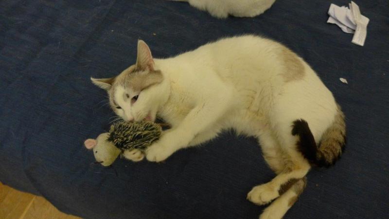 Photos des chats sauvés, avant/après - Page 2 Apras_10