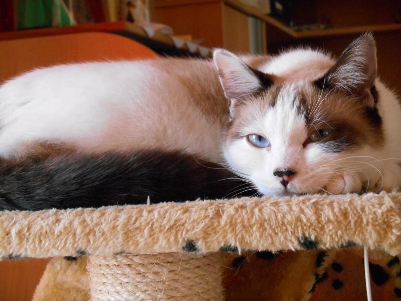 Photos des chats sauvés, avant/après - Page 2 Dscn0010