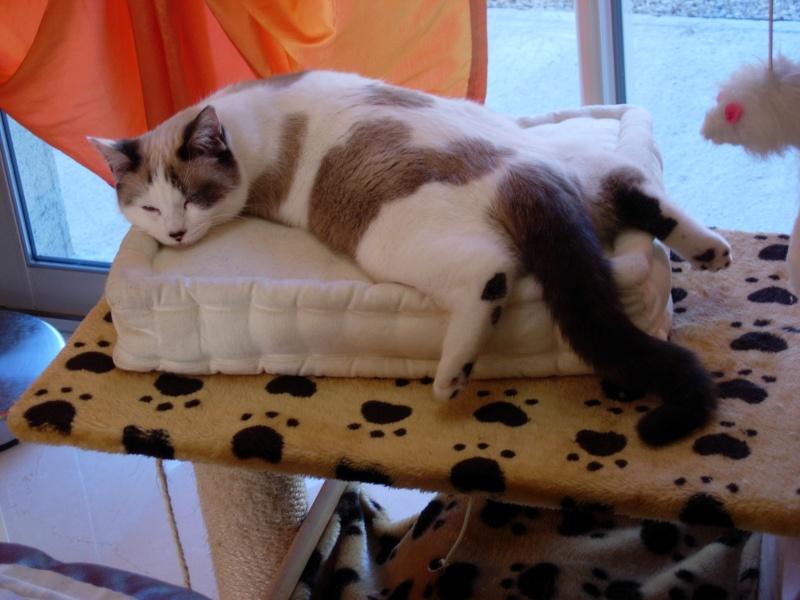 Photos des chats sauvés, avant/après - Page 2 Dscn8710