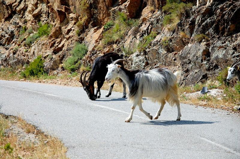 Quelques jours en Corse Corse148