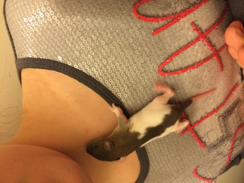 Reste 2 femelles agouti, et une femelle havane hooded dark rubis  Img_5744