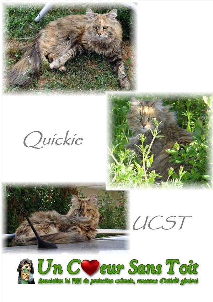 QUICKIE magnifique minette FIV+ de 9 ans Quicki10