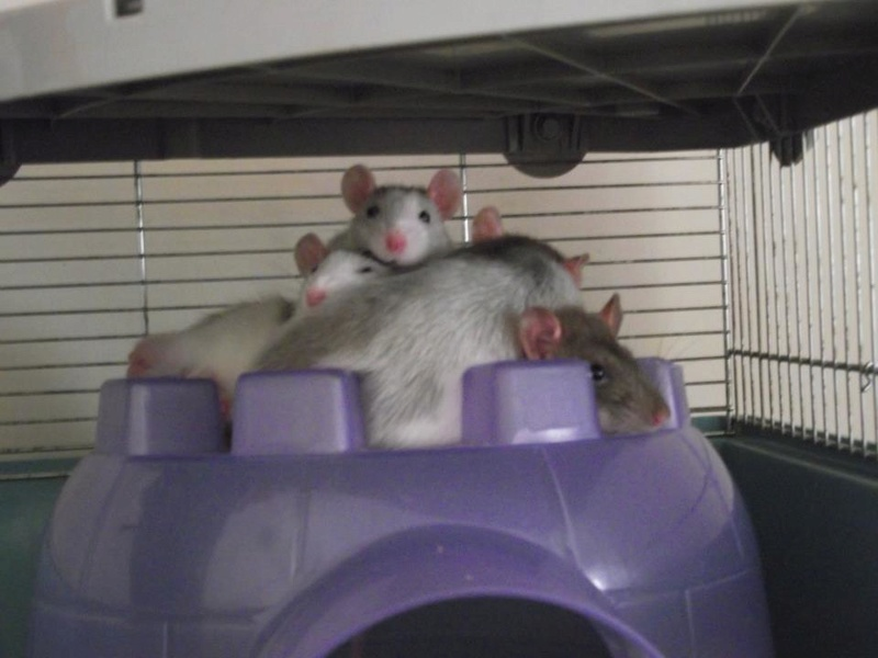 [PHOTOS TOURNAMENT]: Year 12 - Round 2 - Sweet Creature Rats10