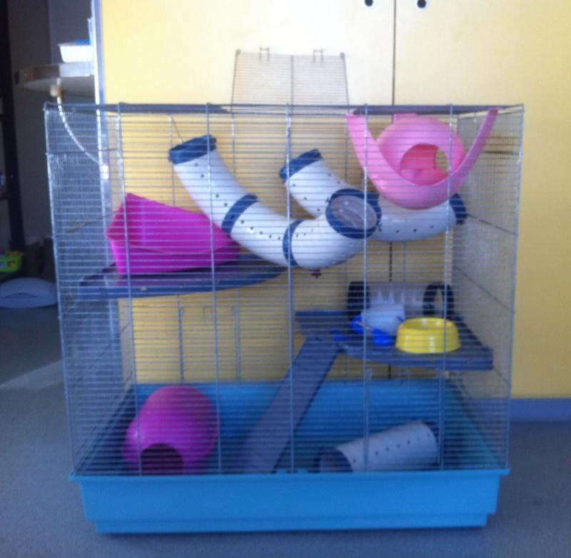 Veng cage jenny + nombreux accessoires (33) Photo310
