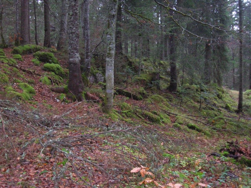 Petite  balade  dans le Jura 04510