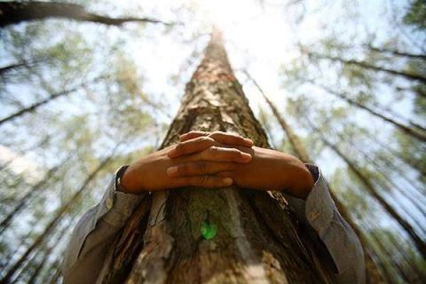 La science prouve qu'étreindre des arbres est bon pour la santé Bbdc9010